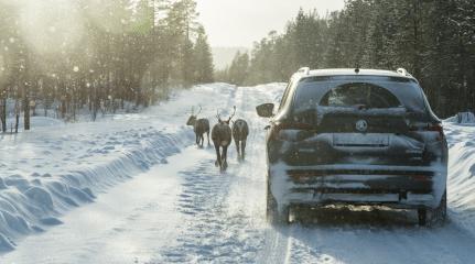 Web Ready PNG-KAROQ_reindeer